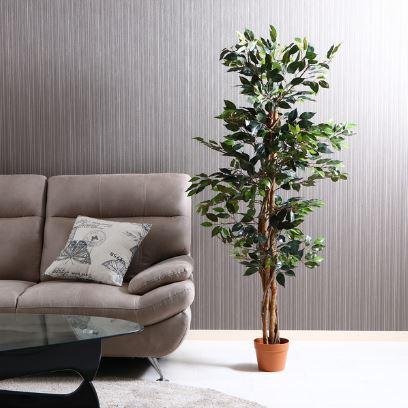 airRoom『人工観葉植物フィカス 6号鉢』