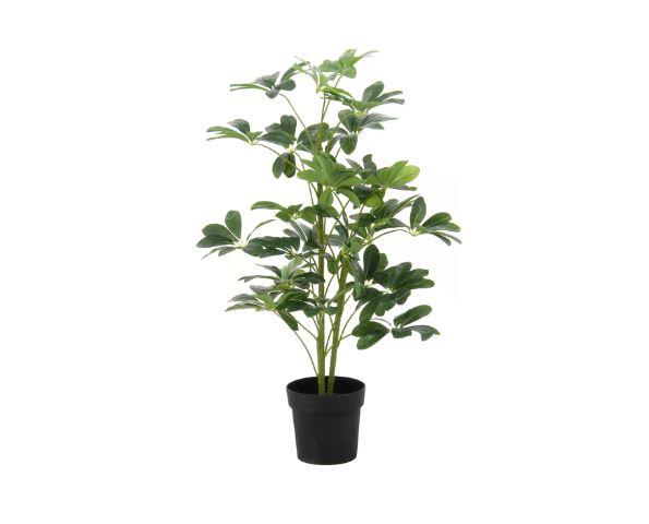 airRoom『人工観葉植物 ヤドリフカノキ』